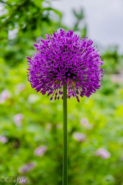 В-моята-градина-In-my-garden