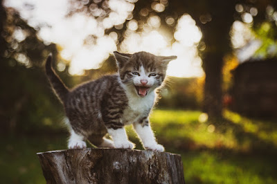 Greta Thunfisch Katze wird Klimaaktivistin