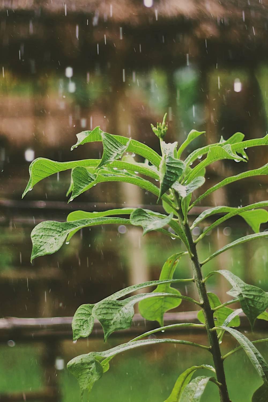 literatura paraibana chuva tranquilidade calma som relaxamento