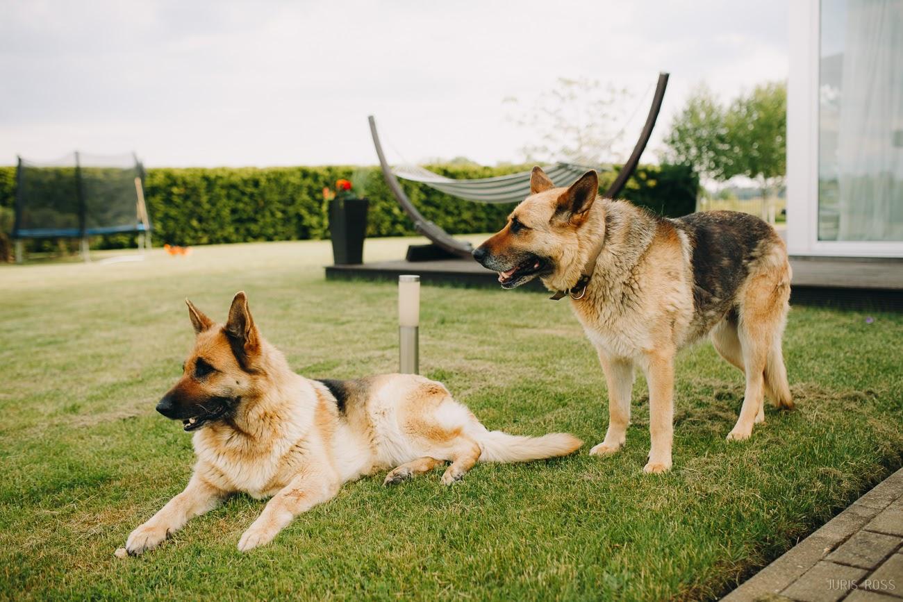 lieli suņi mājās