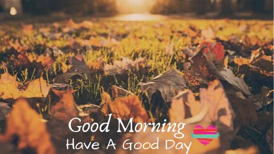nice leaf good morning images