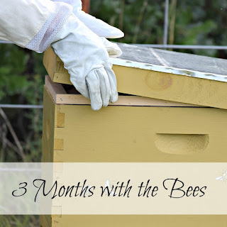 I've been a beekeeper now for three months. I've learned so much, and I have so much more to learn!