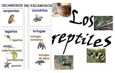 http://ceiploreto.es/sugerencias/cplosangeles.juntaextremadura.net/web/curso_3/naturales_3/reptiles/reptiles.html