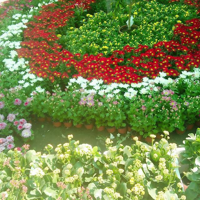 مكافحة حشرات الحدائق بجدة