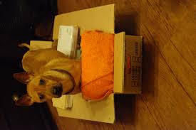 alivio de pressão em cães