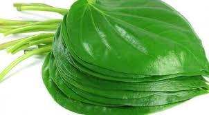 Manfaat daun sirih Sangat bagus untuk daerah kewanitaan