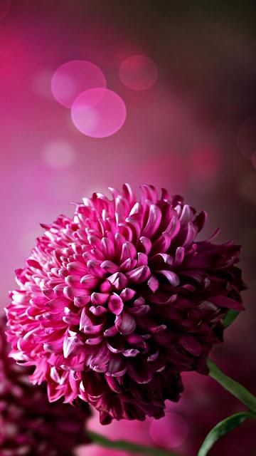 flowers dp