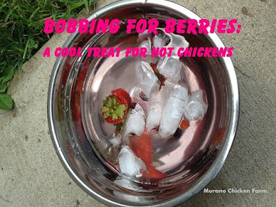 Add frozen fruit to chicken water bowls