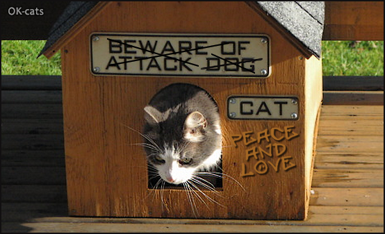 Photoshopped Cat picture • Beware of attack dog ? Nope, Peace and Love with kitty! Cats are ♥ better than dogs.