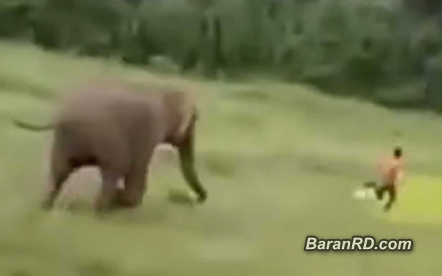 Video: Elefante mata a un niño que se acercó a su manada en la India