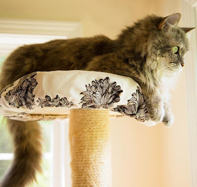 Cat Perch Cover