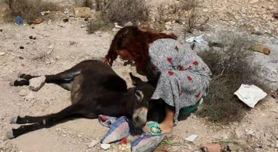 سيدة استرالية تنقذ حمارا من الموت بمدينة اكادير