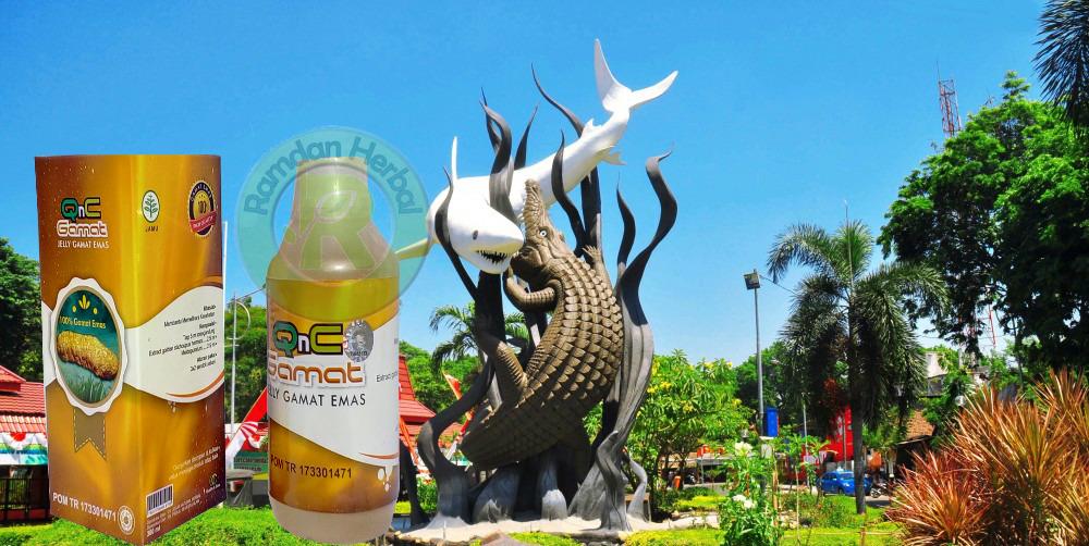 Agen Obat Qnc Jelly Gamat Surabaya