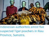 https://sciencythoughts.blogspot.com/2019/12/indonesian-authoriteis-arrest-five.html