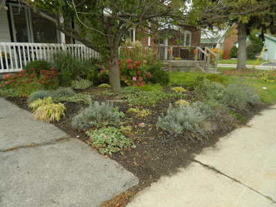 Toronto Fall Front Yard Cleanup Birch Cliff after by Paul Jung Gardening Services