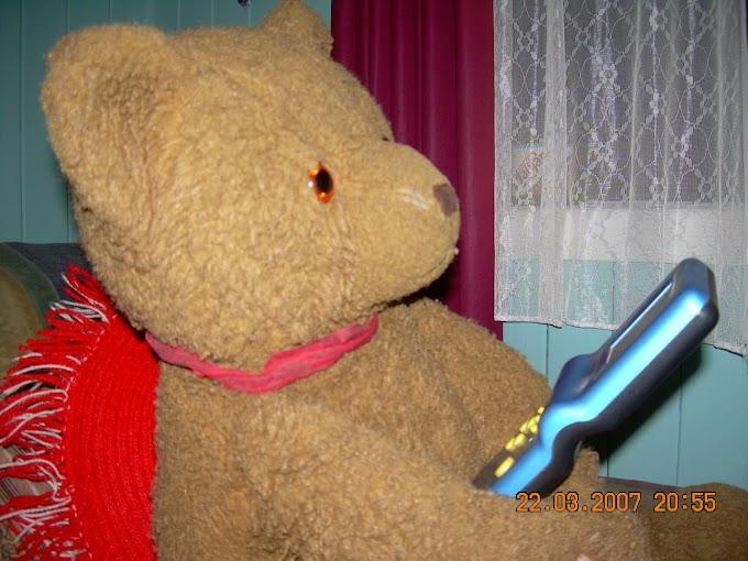 318. El oso teddy
