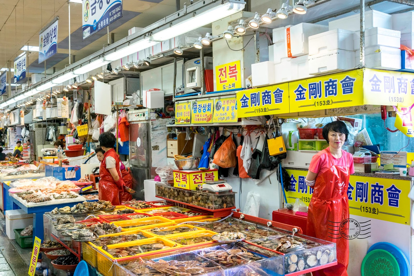 Jagalchi Fish Seafood Market South Korea Busan