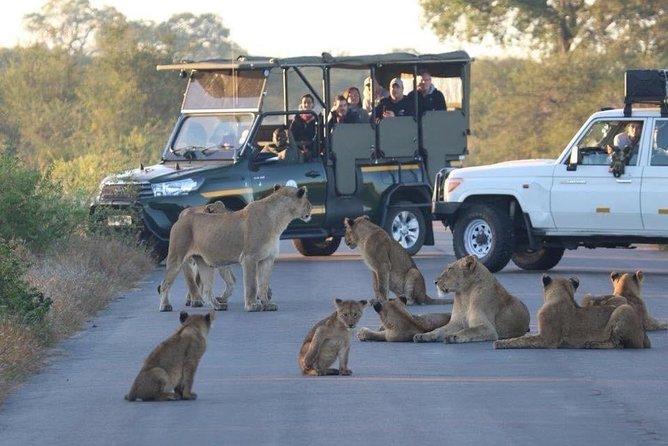 Safari masai mara kenia