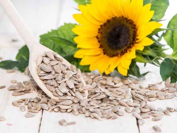 There are many benefits from eating sunflower seeds, the skin will remain shiny and it will remain cool