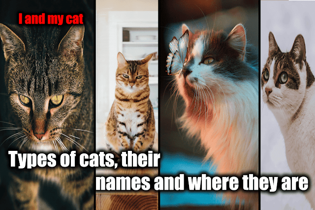 Types of cats, their names and where they are
