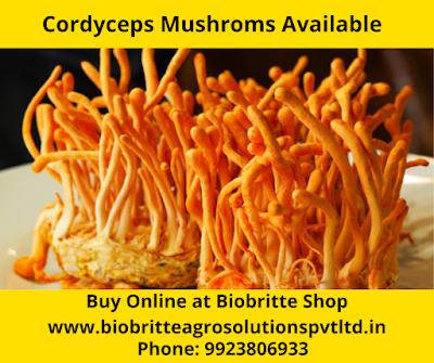 Cordyceps Mushroom Training