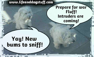 Buffy and Fluffy dogs greeting visitors.