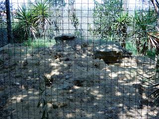 Parco Gallorose(ガッロロゼ公園)フェネックギツネの巣穴