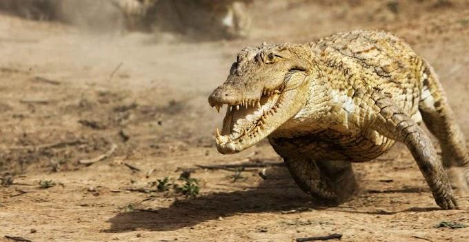 A 100 milhões de anos atrás o deserto do Saara era habitado por crocodilos galopantes