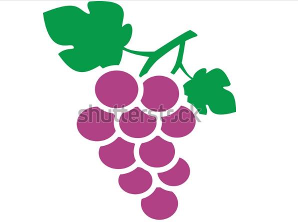 illustration drawing grape