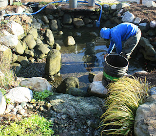 pond cleaning algae