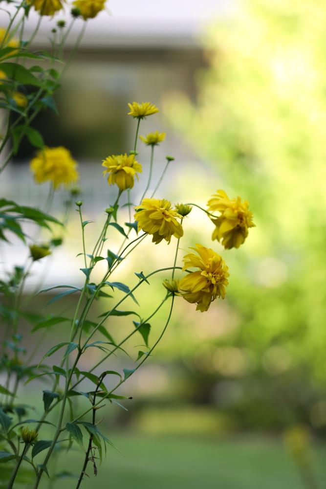 elokuun-puutarha-100outdoor