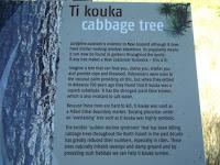 Importance of the Ti Kouka, Cabbage tree - Wellington Botanic Garden, New Zealand