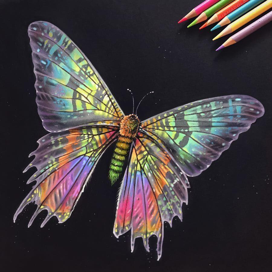 04-Iridescent-Madagascan-Sunset-Moth-Animal-Drawings-www-designstack-co