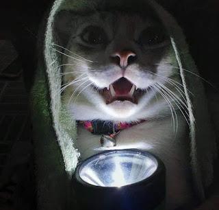 Foto kucing lucu seram