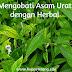 Mengobati Asam Urat dengan Herbal Alami