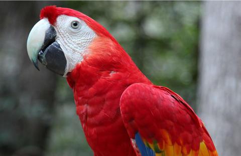 Venta De Carros En Honduras >> Vols en/in Honduras: 41 especies sumarán a lista de peligro de extinción en Honduras