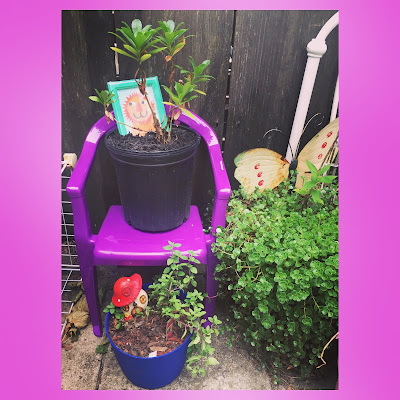 Oregano plant in container garden with little fairy garden mushroom house