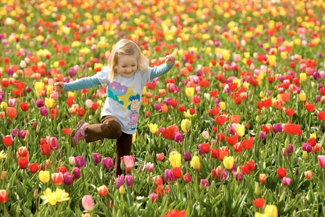 Hoa tầm xuân nở rộ vào những ngày mùa Hè tạo nên khung cảnh nên thơ cho những ai lần đầu du lịch đến Nga. Thậm chí còn có những khu phố rợp màu tím mượt của hoa tầm xuân dệt nên thảm tường màu sắc rực rỡ và ấn tượng. Đặc biệt loại hoa này còn được sử dụng như một loại nước uống ngọt mát đặc trưng của xứ sở bạch dương.