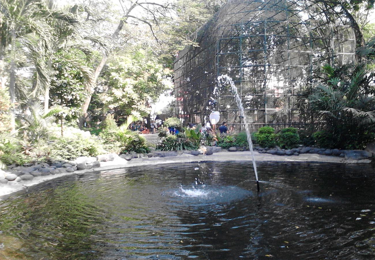 Taman Flora Surabaya  ( Kebun Bibit Bratang)