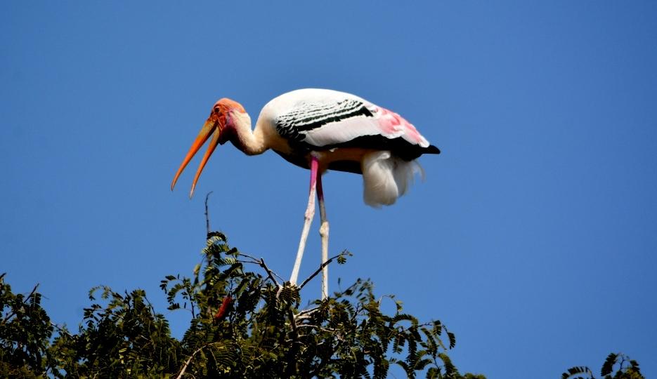 A VILLAGE WHERE HUMAN AND BIRDS LIVE IN HARMONY: KOKREBELLUR, KARNATAKA