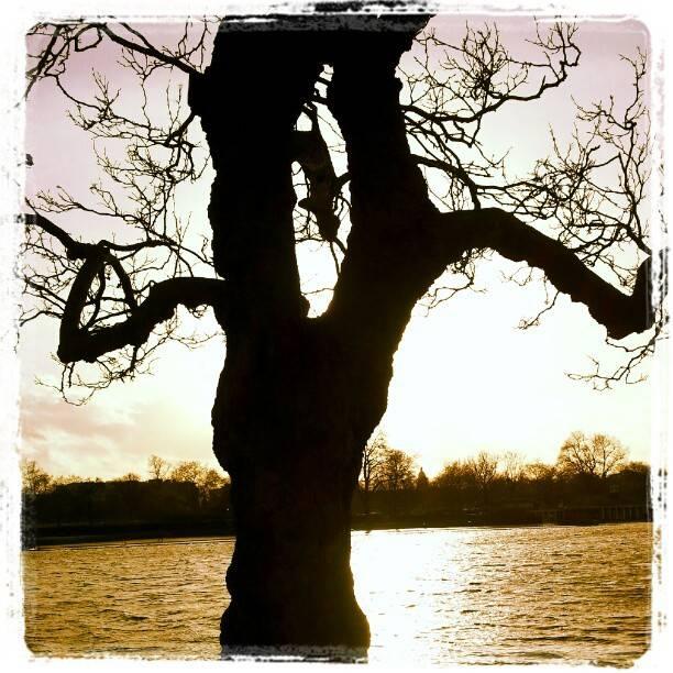 Sunshine On A Windy Day : Wordless Wednesday Blog Hop