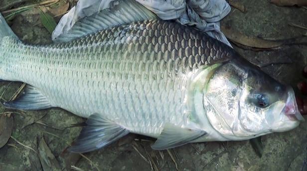 Jenis Ikan Menyehatkan Yang Sering Dikonsumsi