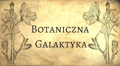 https://botanicznagalaktyka.pl/