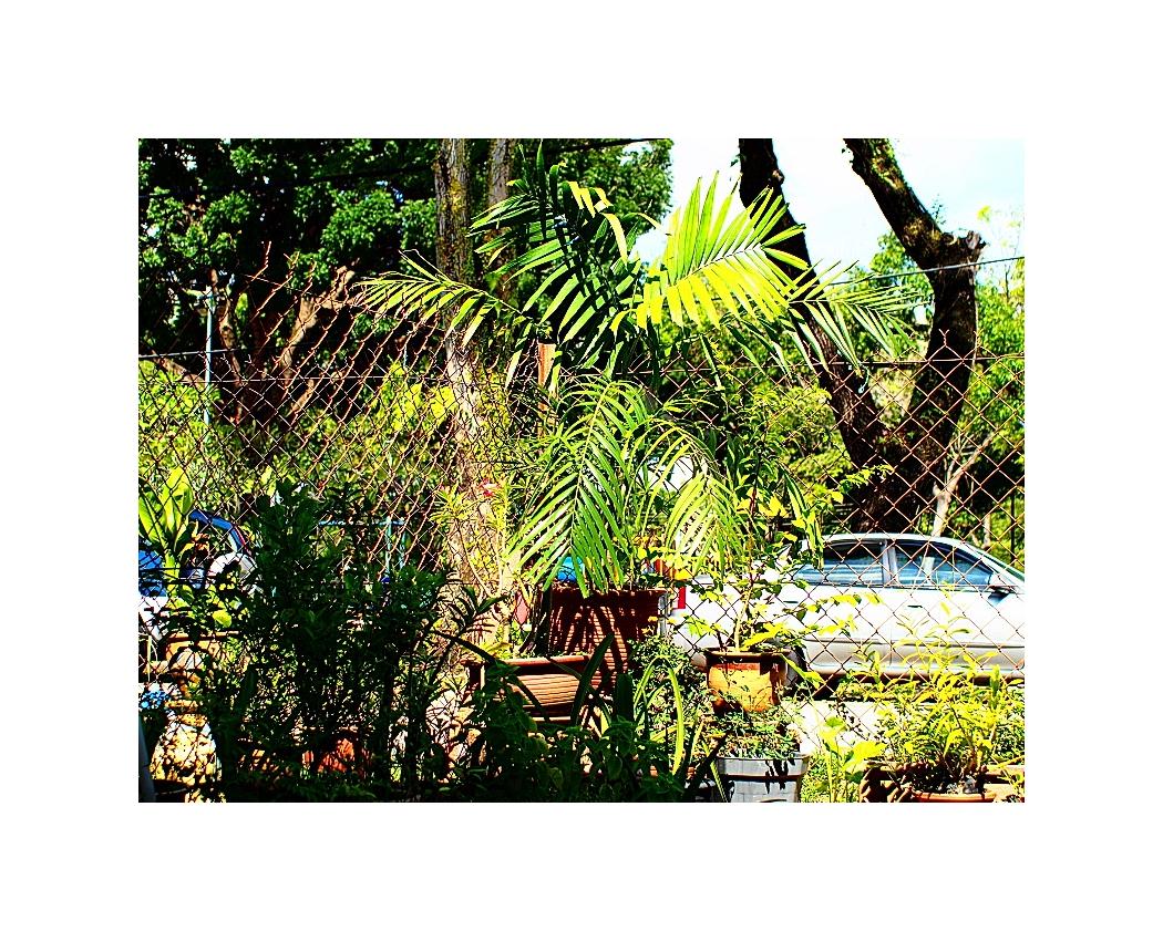 Minolta MD Zoom 28-85mm F3.5~4.5 03