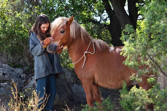 Imagen Mi amigo Pony