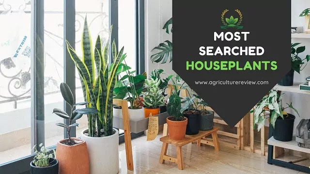 most searched houseplants