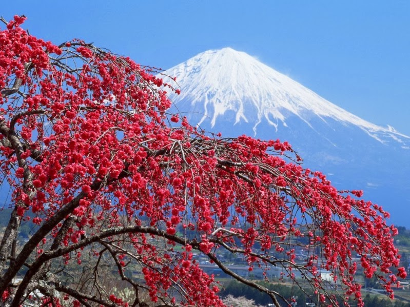 Sejumlah Tempat Wisata Di Jepang Yang Indah Memukau