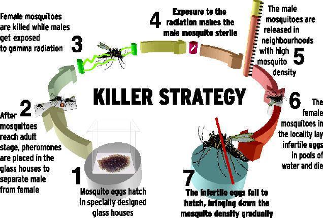 Eradicate Dengue