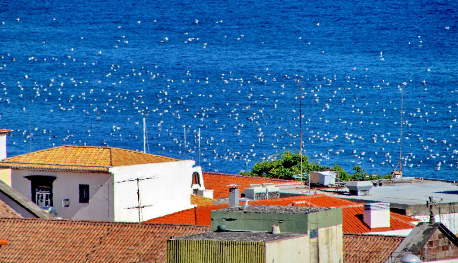 seagulls, seagulls and more seagulls