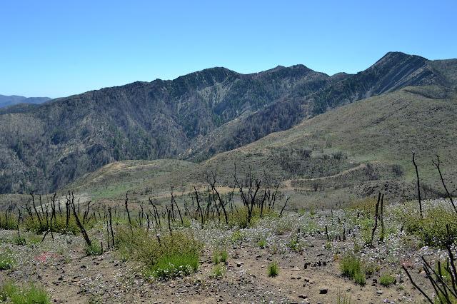 road below Ortega Hill